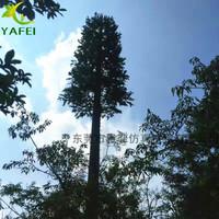 30米基站松树