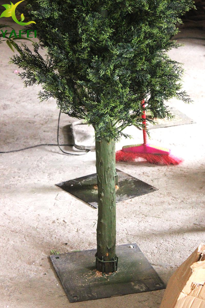 松柏树.jpg