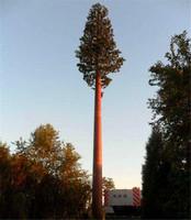 40米造景松树