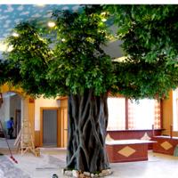 包柱假榕树