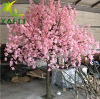 垂钓樱花树